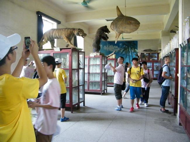 参观动物标本馆